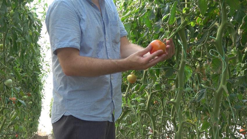 Εξοντωτικά πρόστιμα στους αγρότες για τους εργάτες γης